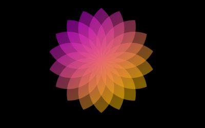 Tuto Affinity Designer : création d'une composition florale